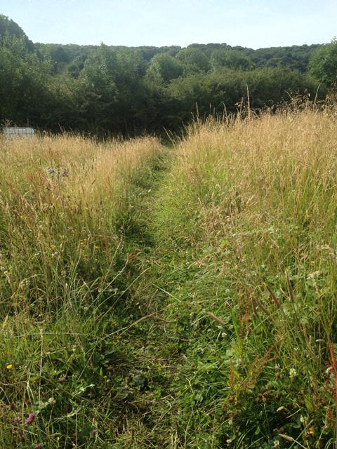 Uncut grassland near Stathern Wood