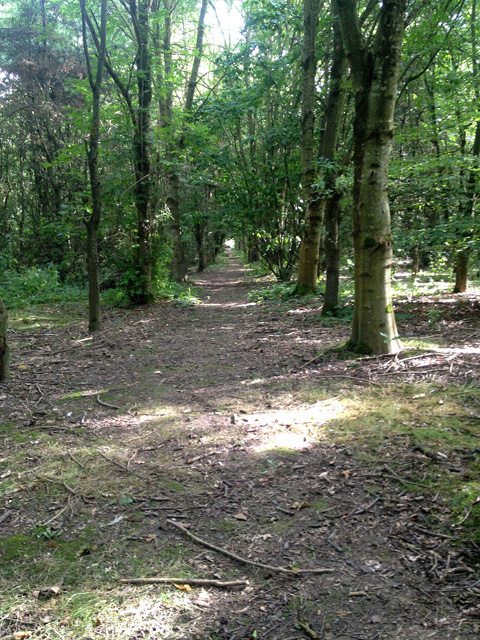 Small mixed woodland near Stathern