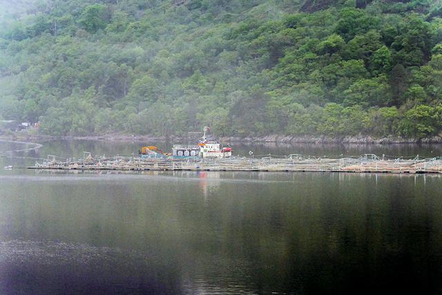 Marine Harvest Fish Farm on Loch Linnhe