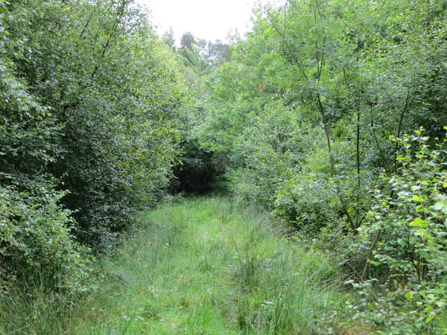Footpath through Beechcroft Moor Plantation