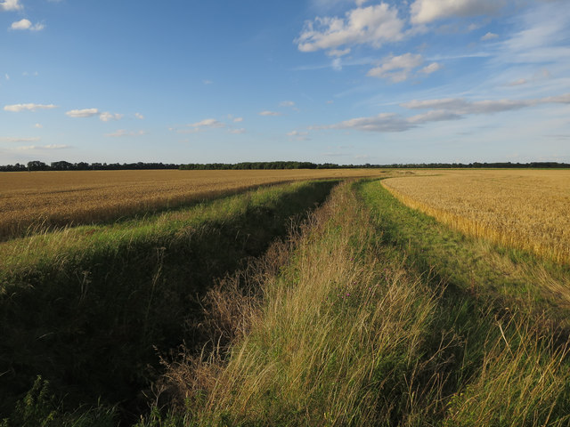 Ditch and fields near Rectory Farm