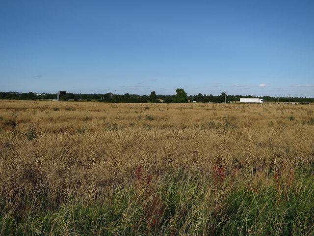 Oilseed rape by the M11