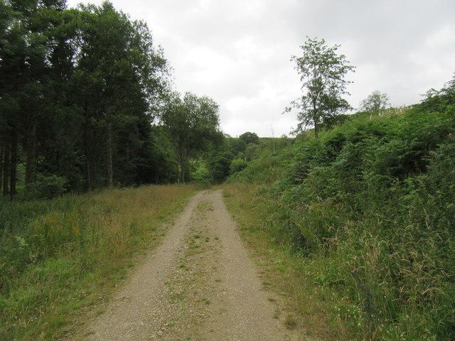 Cockerdale Wood