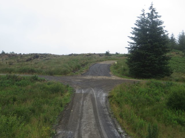 Track junction in Wark Forest