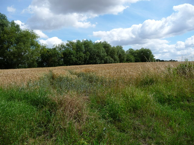 Corner of a wheatfield, east of Old Hall
