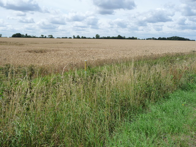 Wheatfield, south of the footpath to Cromwell Plantation
