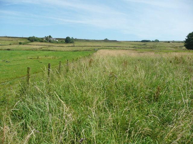 Wadsworth FP74 through long grass, Chiserley