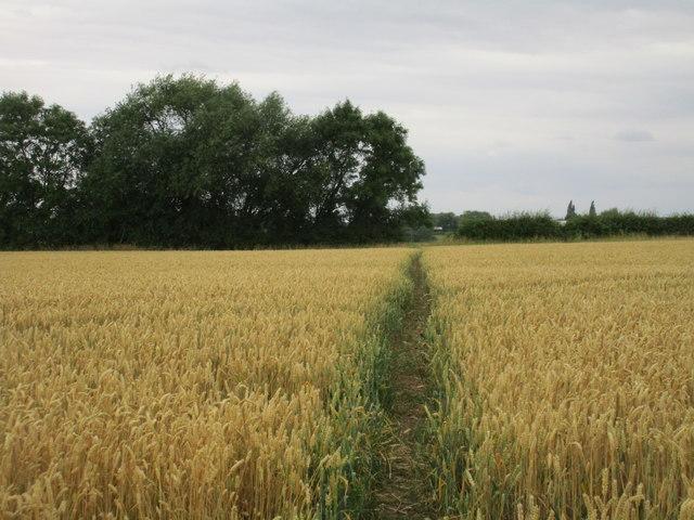 Footpath off Crink Lane