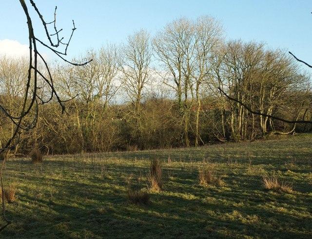 Field near Ferndown