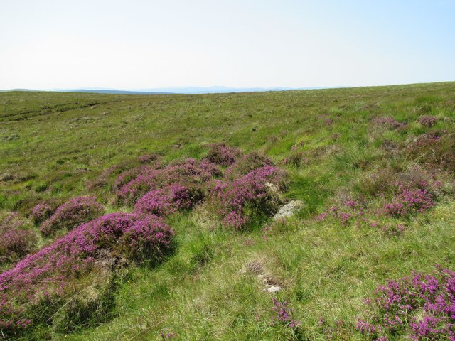 Heather on the moor above Dalnessie, Lairg
