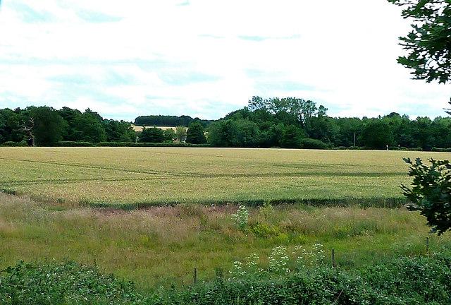 Farmland Near Thuxton