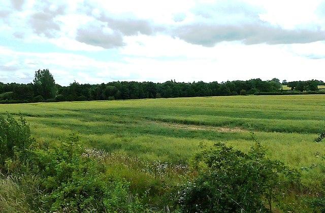 Farmland Near Garvestone