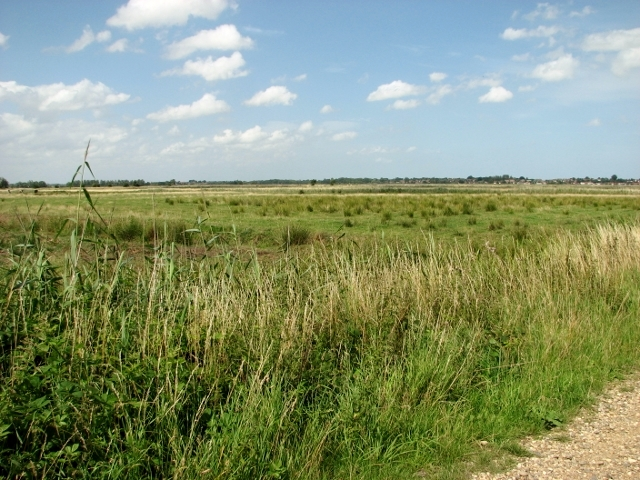 Pastures and fields in the Norton Marshes