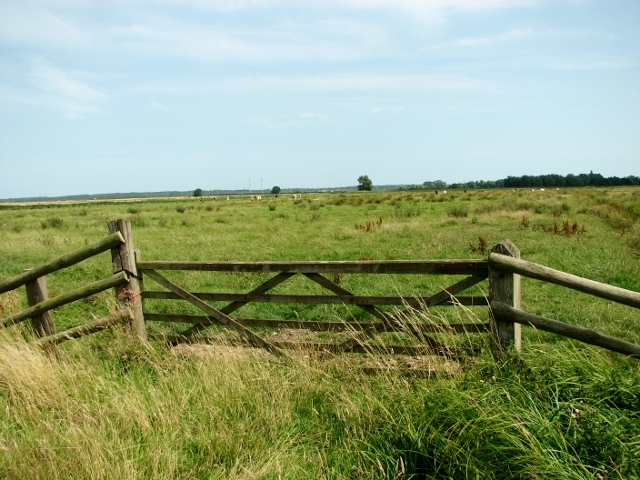 Cattle pasture in the Norton Marshes