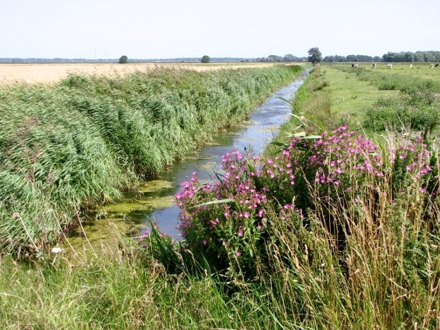 Drainage ditch in the Norton Marshes