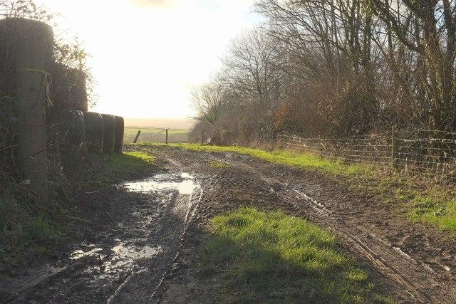 Track into field near Chittlehampton