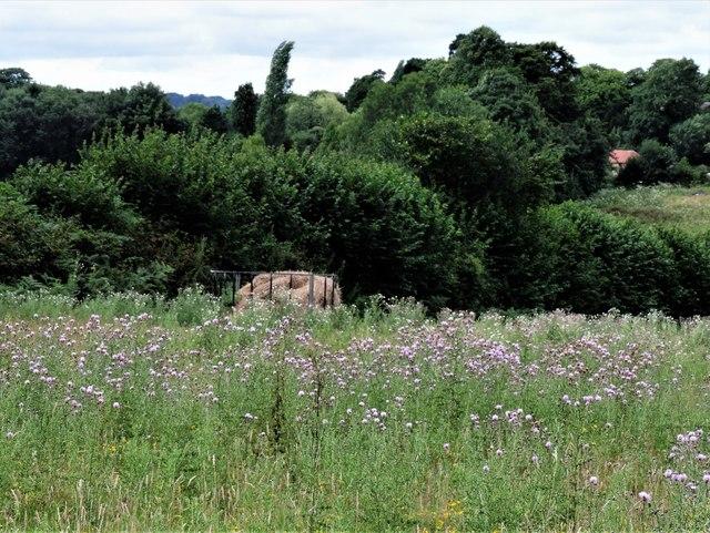 Hay feeder among creeping thistles, Churchland Fields