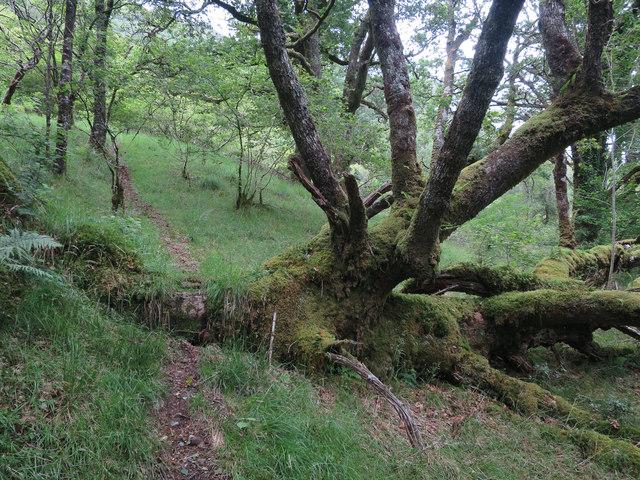 Path along Eas an Diblidh
