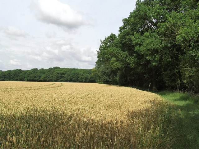 Footpath Near To Oldfield Grove