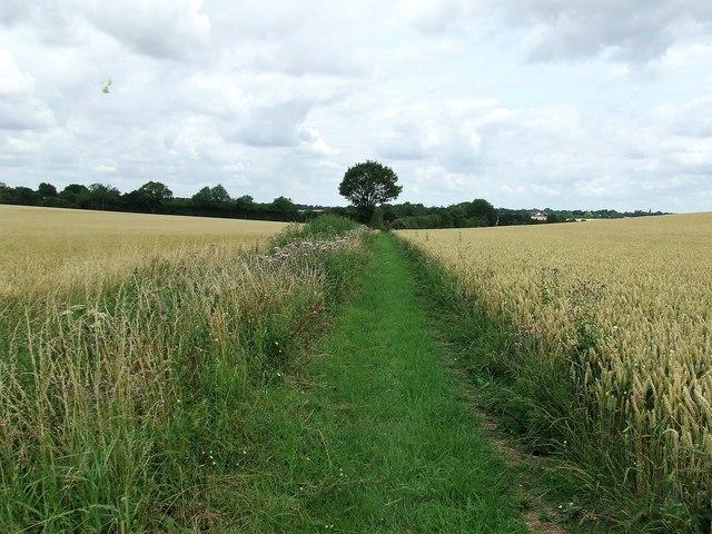 Footpath Looking North