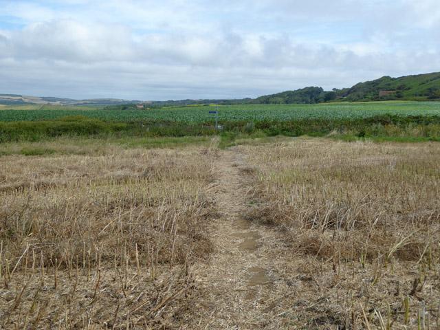 Coastal path near Whale Chine