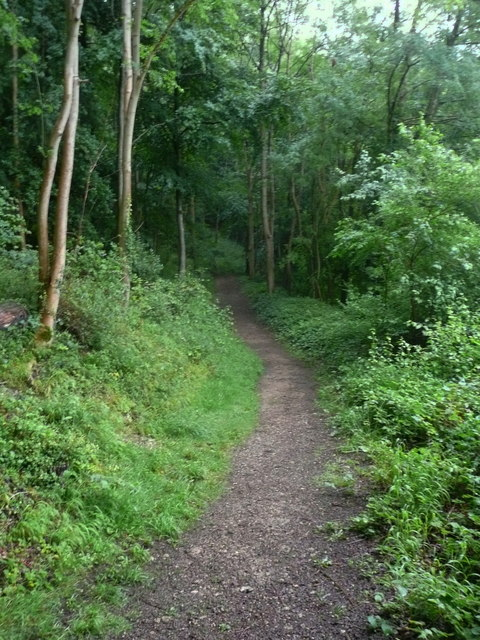 Footpath along the edge of Pinchcombe Wood