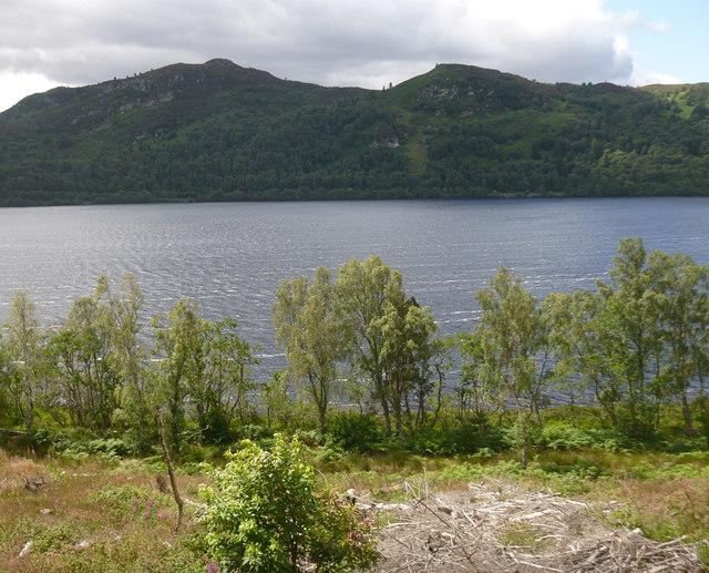 Birch trees, by Loch Garve