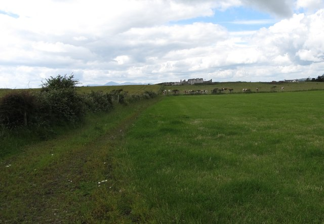 Grassland at Ballyquintin Farm