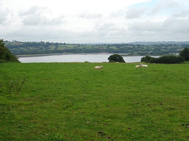 Sheep pasture above Carsington Water