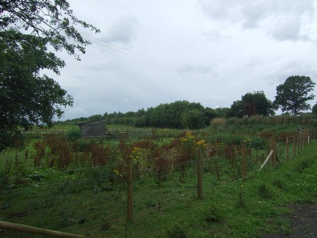 Rough grazing near the M5 Motorway