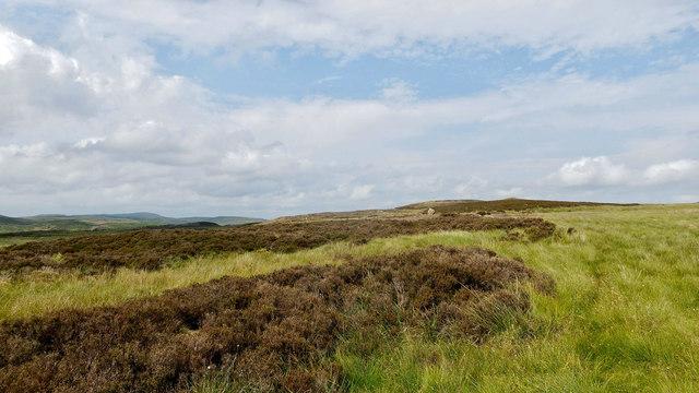 Moorland between West Langwell and Loch na Cinneamhuin, Rogart