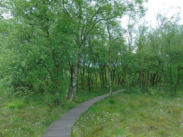 Tarn Moss (woodland)