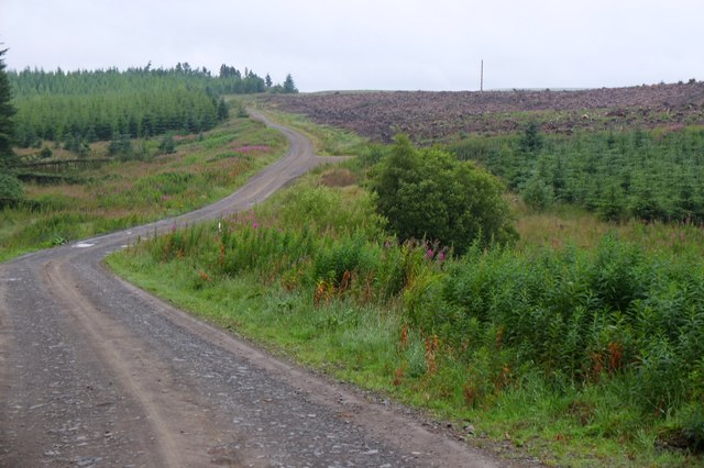 Clear-felled forest near Middle Burn