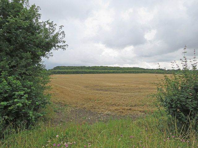 Stubble and The Beechwoods Nature Reserve