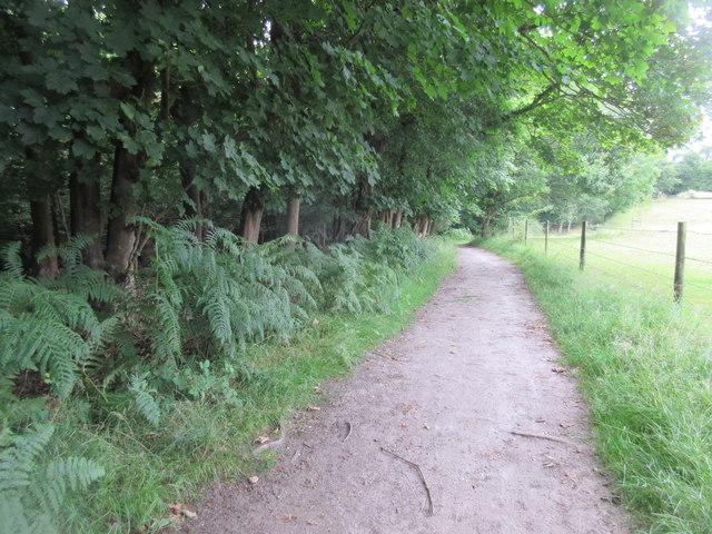 Bridleway along edge of woods