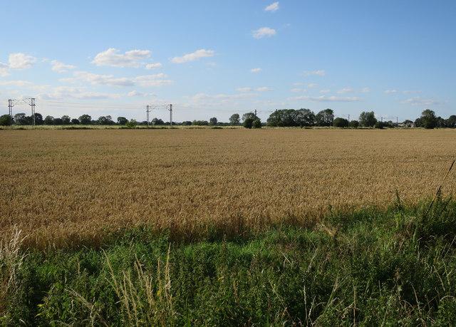 Field off Long Drove