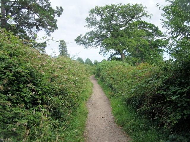 Oak tree near bridleway