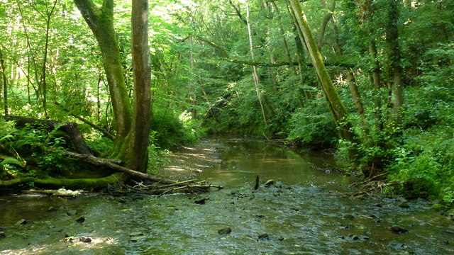 The Leigh Brook near Papermill Coppice