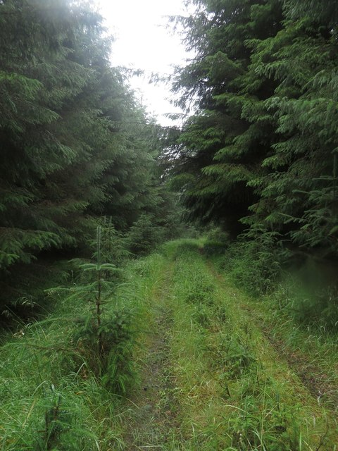 Little used forest track, Wark Forest