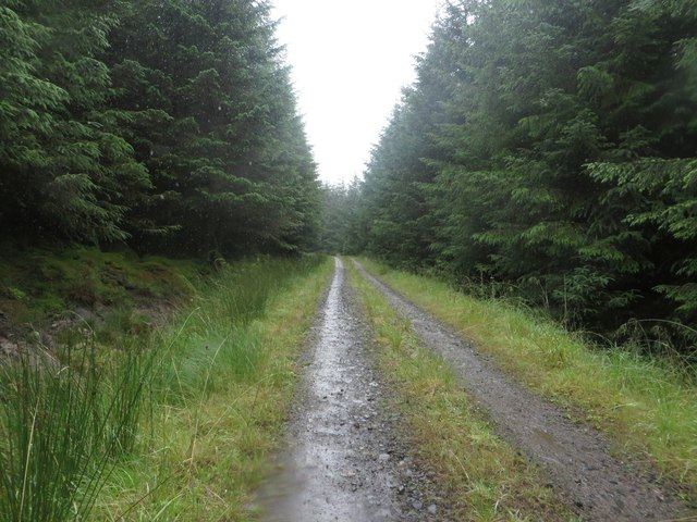 Forest track in Wark Forest