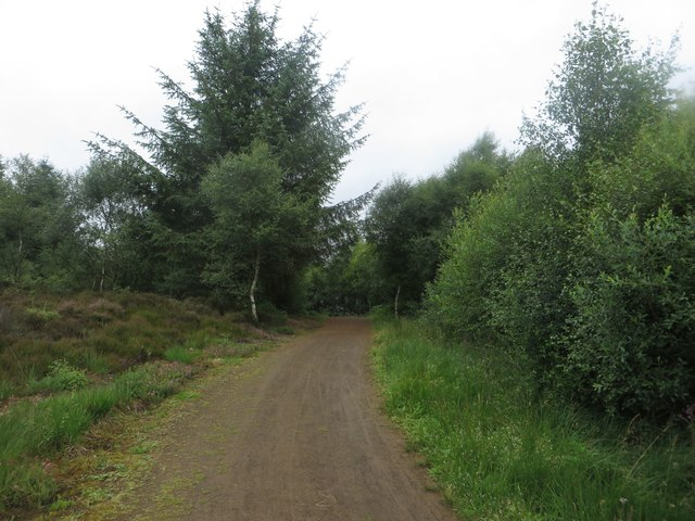 Lakeside cycle path, Kielder Forest Park