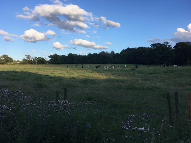 The sun catches a cow field