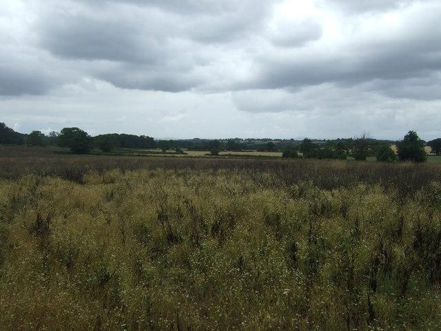 Crop field near Webbhouse Farm