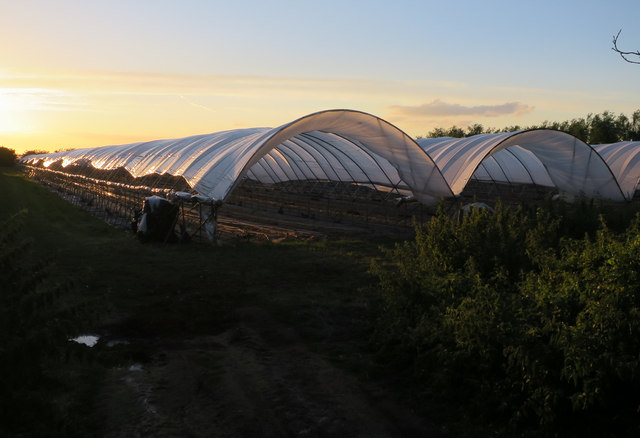 Polytunnels at Sunclose Farm