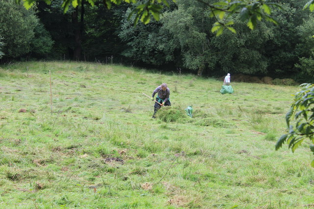 Clearing rushes from sheep pasture, Cwm Merddog