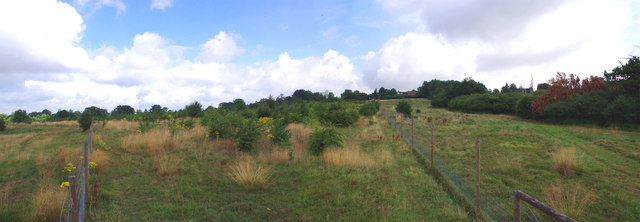 Plantation Panorama; Epping Forest Buffer Lands