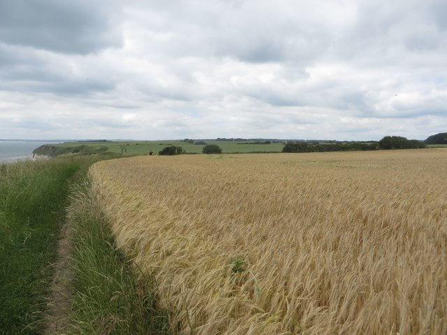 Coastal arable field