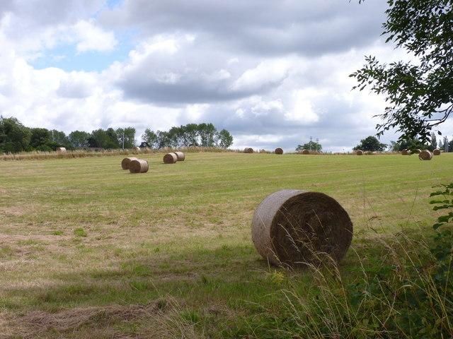 Field near Burcot, Worcestershire