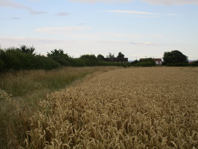 Wheat field and cottages on Pollards Lane