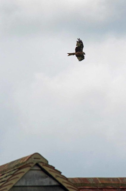 Red Kite Over The New Barn
